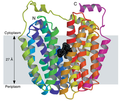 <figcaption> Credit: &#169; 2003 AAAS</figcaption>