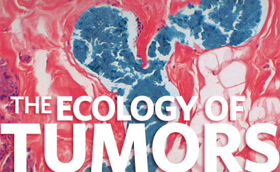 The Ecology of Tumors