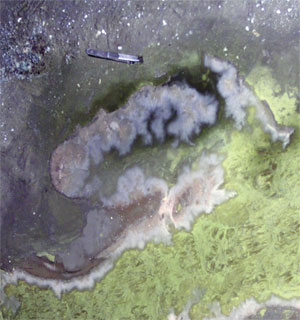 <figcaption>A pink biofilm on the surface of an acid mine drainage system in Iron Mountain, Calif. Forceps included for scale. Credit: COURTESY OF RUDY CARVER AND JILL BANFIELD</figcaption>