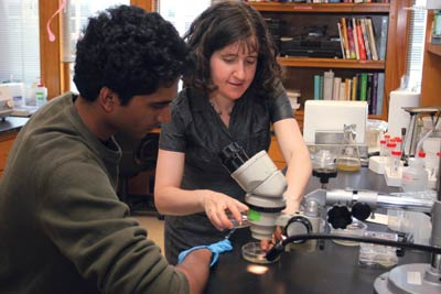 <figcaption>Landweber with student Vikram Vijayan examining different species of ciliates swimming and dividing under the microscope. Credit: &#169; 2006 DENISE APPLEWHITE</figcaption>