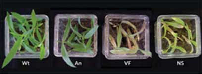 <figcaption> Credit: © 2006 AAAS</figcaption>