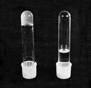 <figcaption>Inverted tubes of gelled macrophage supernate (left) and water (right) for comparison. Credit: © Stossel, T.P., and J.H. Hartwig originally published in J Cell Biol 68:602-619, 1976.</figcaption>