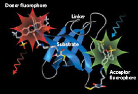 <figcaption> Credit: Courtesy of B. Schuler / Department of Biochemistry, University of Zurich.</figcaption>