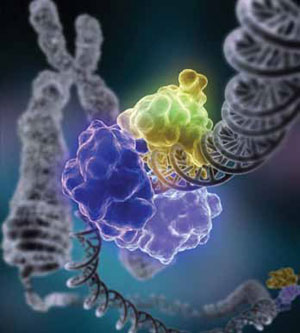 <figcaption>Proteins, like this ligase, repair broken DNA. Credit: Image courtesy of Tom Ellenberger, Washington University School of