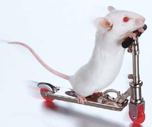 Lab Toys | The Scientist Magazine®