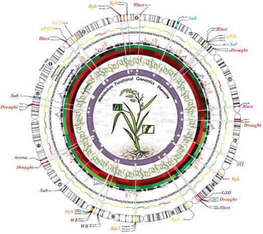Post Genomic Era Into The Post Genomic Era