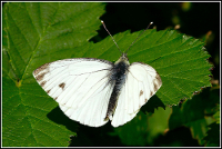 Are certainly Male mating success female butterflies sperm are